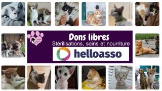 Amis des chats, mobilisez-vous !