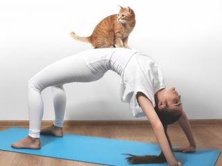 Du yoga au profit des chatons