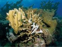Une licence pro mention « métiers de la mer» à l'université des Antilles