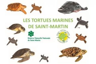 Tortues Marines de Saint-Martin