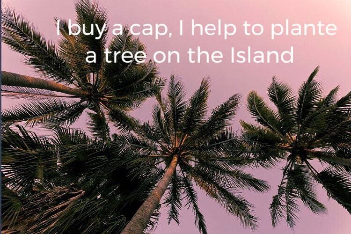 Plantation d'arbres à Saint-Martin