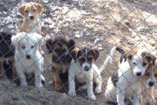 Attention, une nouvelle capture de chiens errants dès lundi