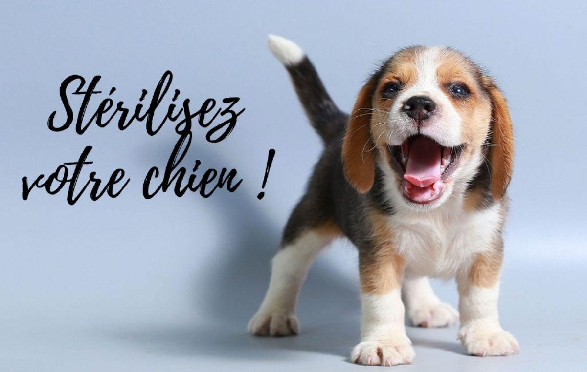 Grande campagne de stérilisation de chiens ce samedi 25 mai