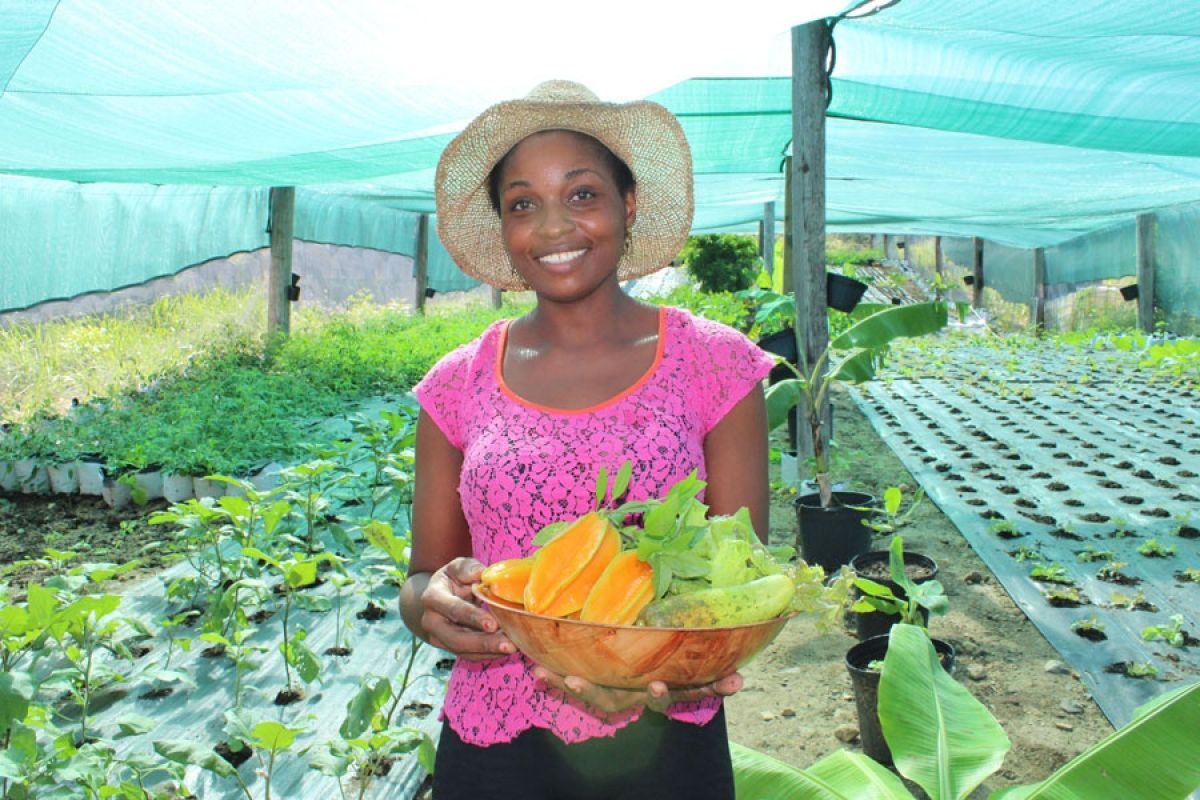 Sxm Fisherie Farm : une production locale et bio