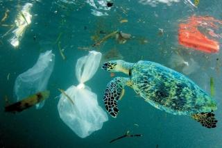 Unies, les deux parties de l'île partent en guerre contre le plastique
