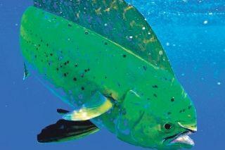 Pêche maritime de loisir : un nouvel arrêté vient augmenter la réglementation
