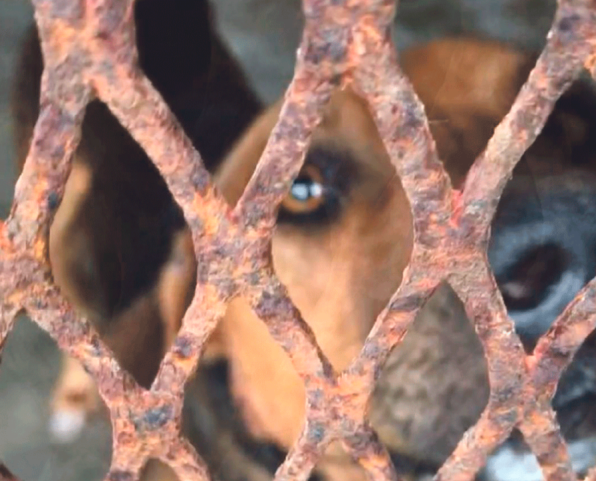 Vous voulez sauver des chiens de l'euthanasie ? Rendez-vous samedi à partir de 10h à la fourrière