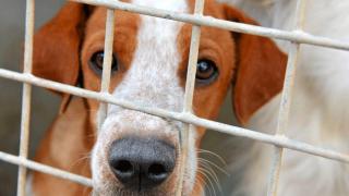 Un refuge animal à Saint-Martin… Une évidence