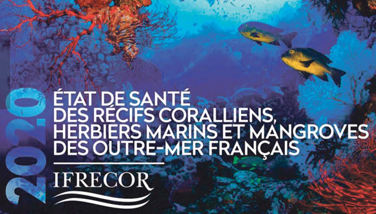 Journée Mondiale des Océans : mobilisation pour les récifs coralliens