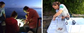 Étude scientifique de la Réserve Naturelle : appel à bénévoles
