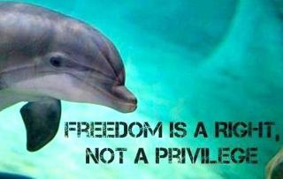 Le projet de Delphinarium  à Sint Maarten à nouveau  en question
