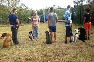 Samedi 15 avril: Une journée dédiée à l'adoption au Refuge I Love My Island Dog