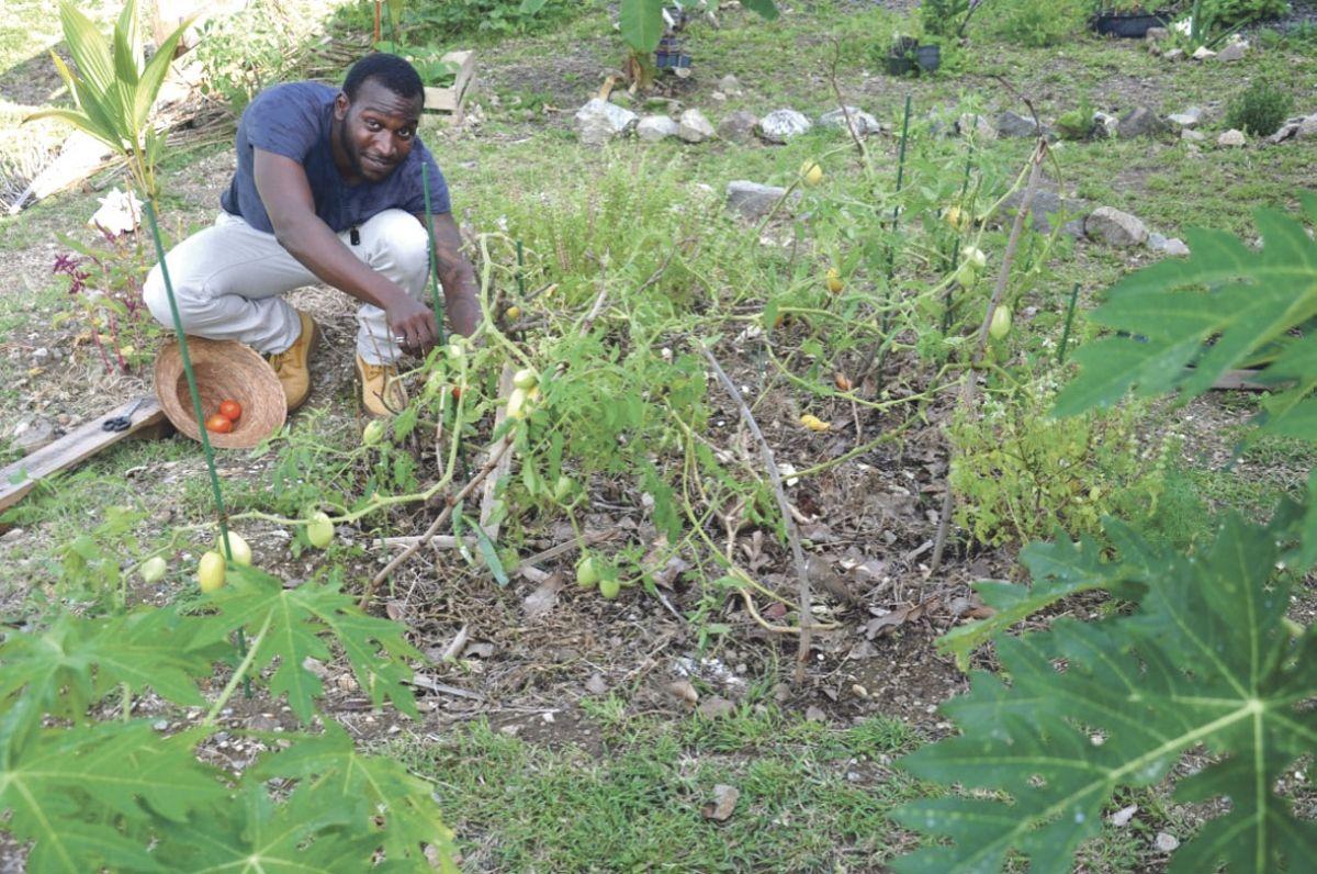 Anthony Ashford invite la population à découvrir tous les avantages du jardin collectif