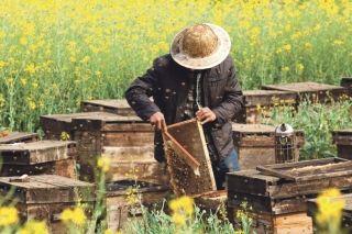 Bio malgré elle, l'île de Cuba est devenue le paradis des abeilles