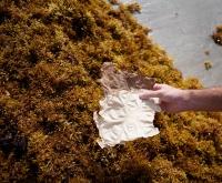 Sargasse Project : retenu comme une solution innovante pour les océans